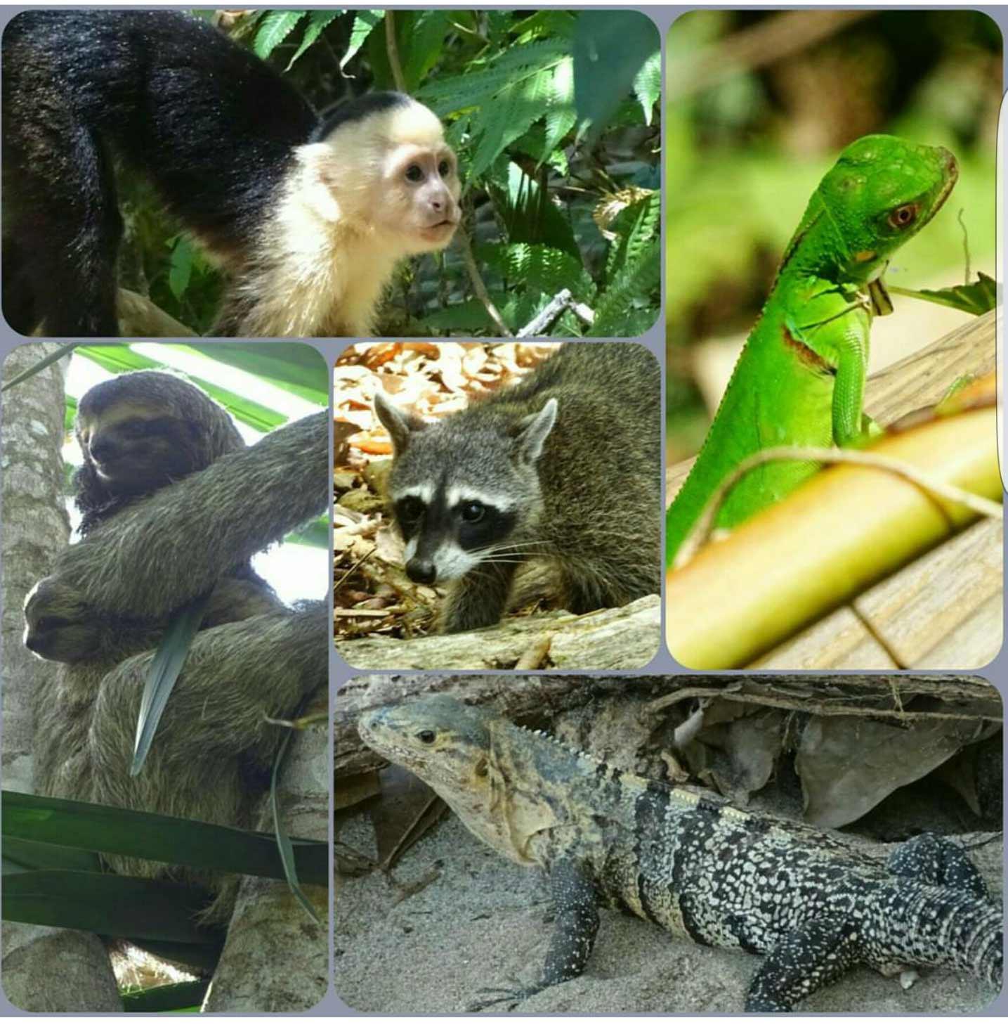 Animales-Parque-Manuel-Antonio