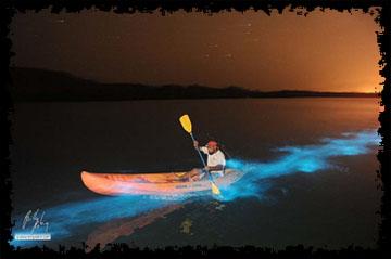 Efecto-bioluminescente-Puerto-Rico