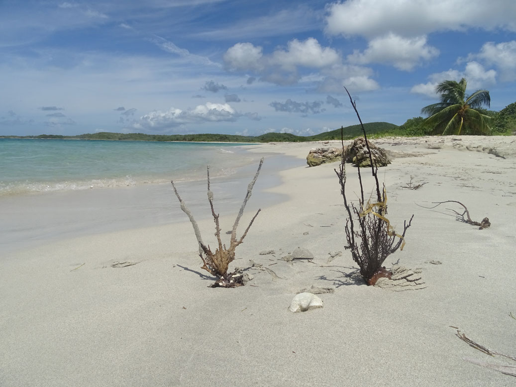 Playa-10-Puerto-Rico-Isla-Vieques