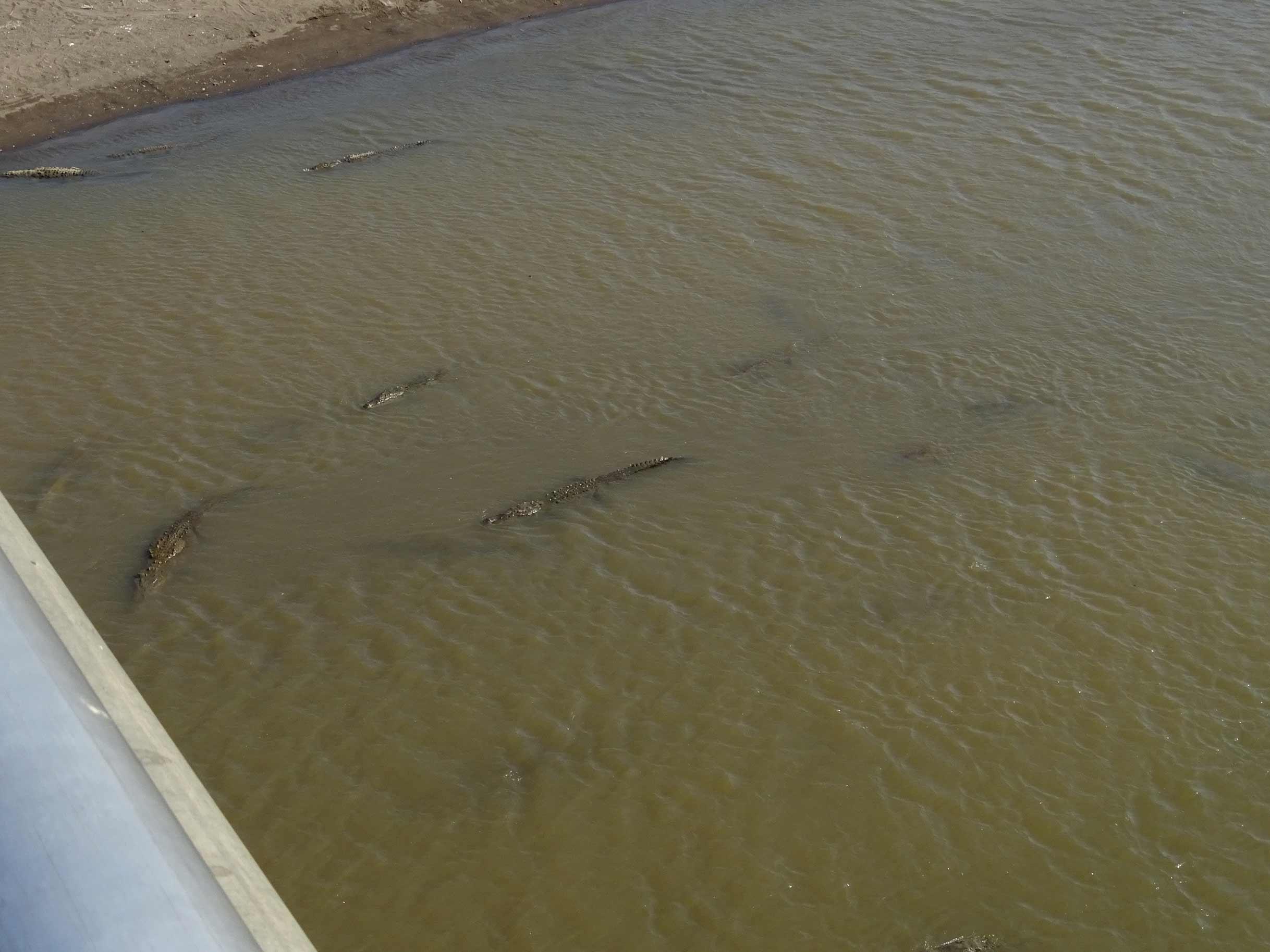 Puente-de-los-caimanes-Tarcoles