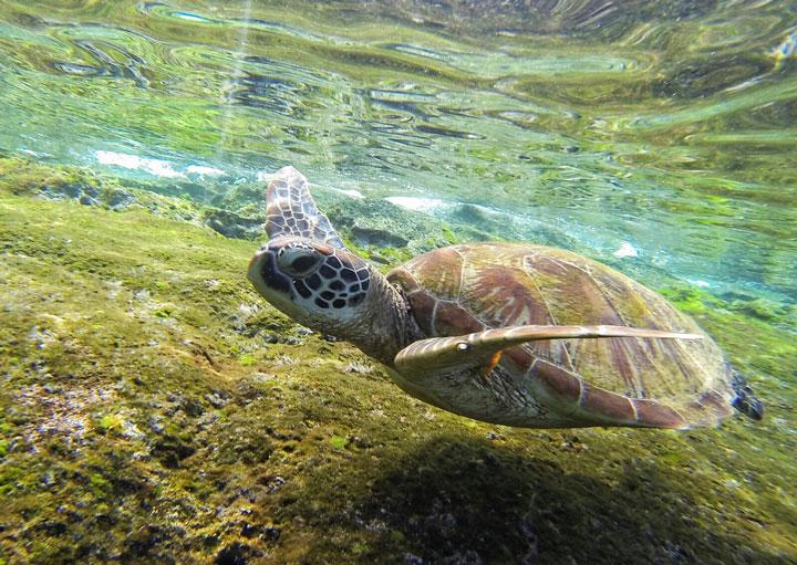 Tortuga Apo Islands