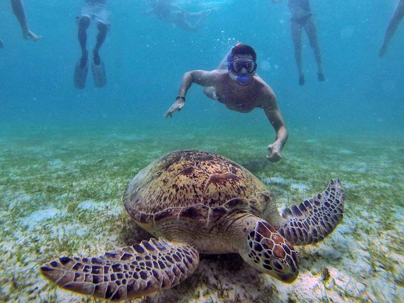 Turtle-Puerto-Princesa