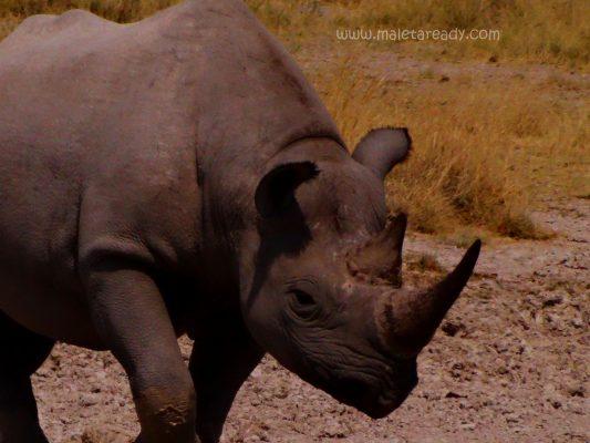rhino-safari-southafrica
