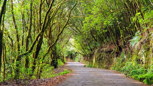 Bosque-El-Cedro