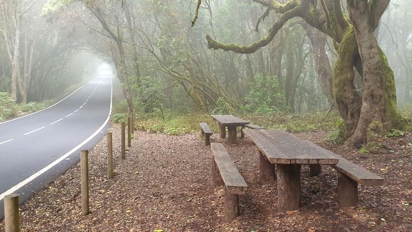 Fog-in-Garajonay-Park