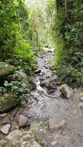 intersección-río-valle-cocora